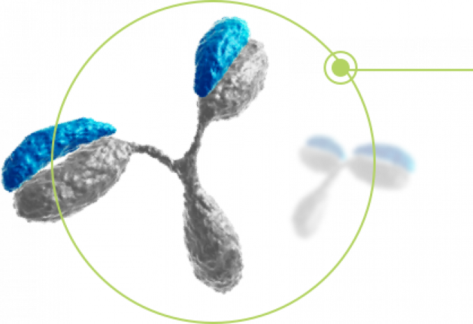 This image has an empty alt attribute; its file name is antibodies.png